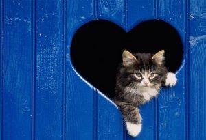 Gatto-cuore